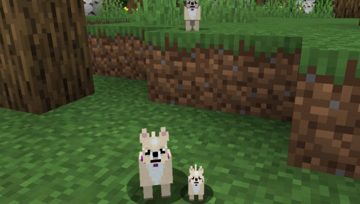 More Dogs - New Creatures Mod For Minecraft 1.15.2, 1.14.4